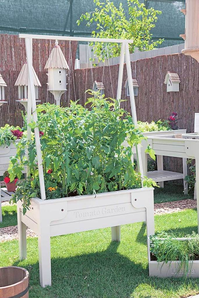 ไอเดียทำสวนผัก